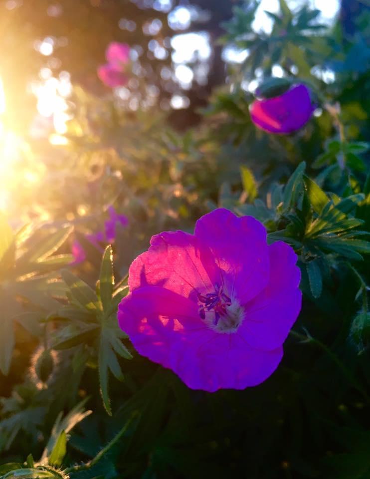 Healing Garden 5