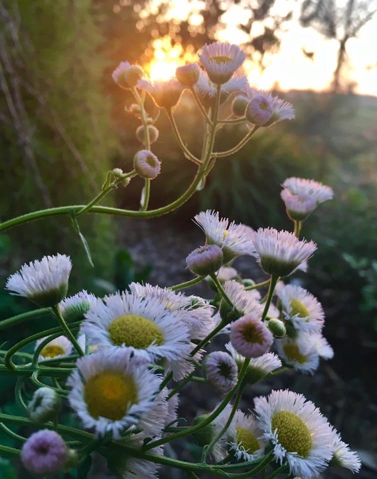 Healing Garden 7