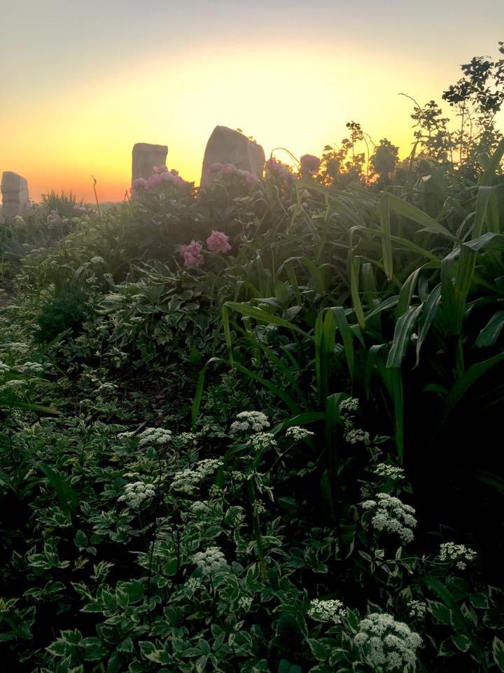 Healing Garden 8
